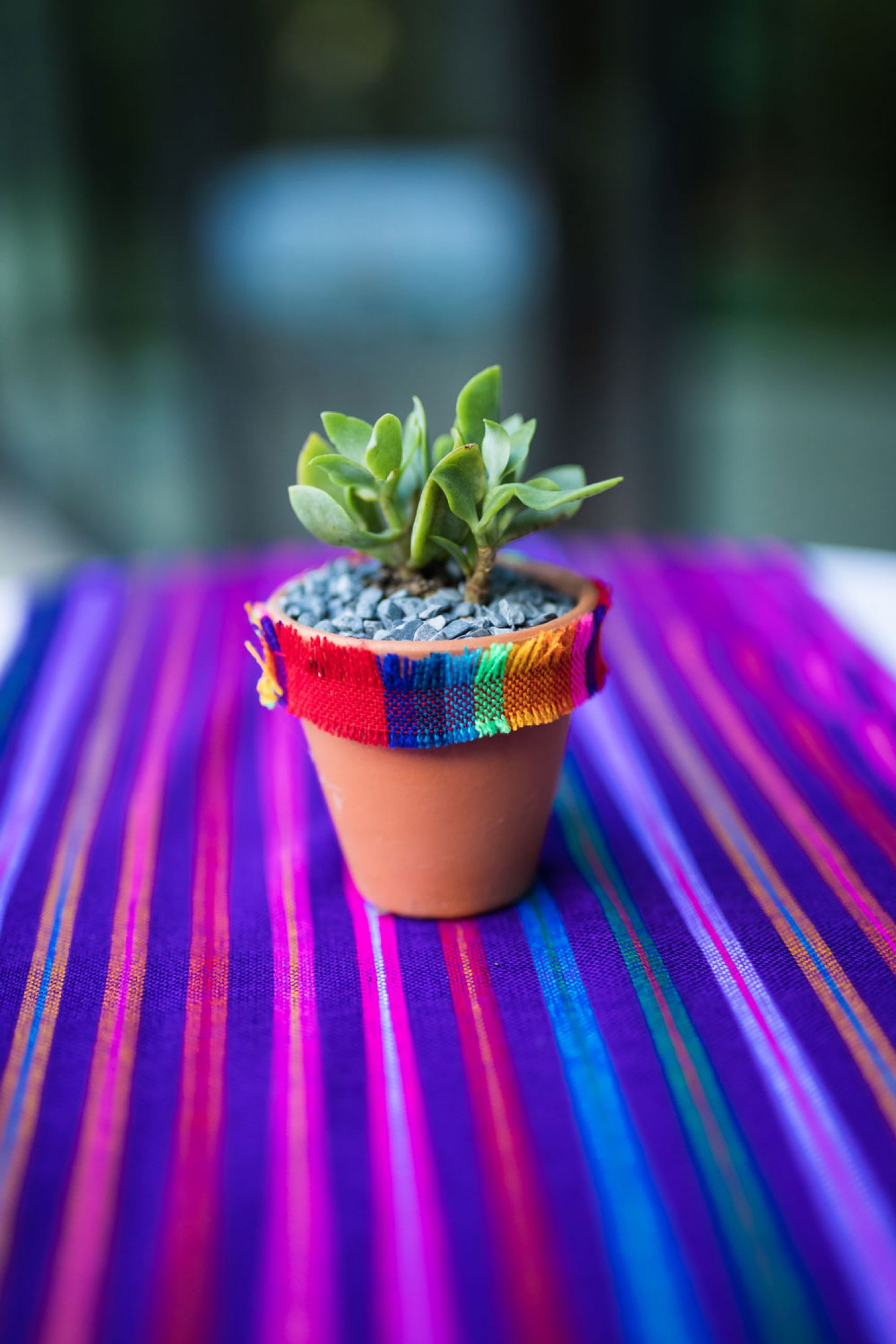 Close up of colorful fabric and succulent
